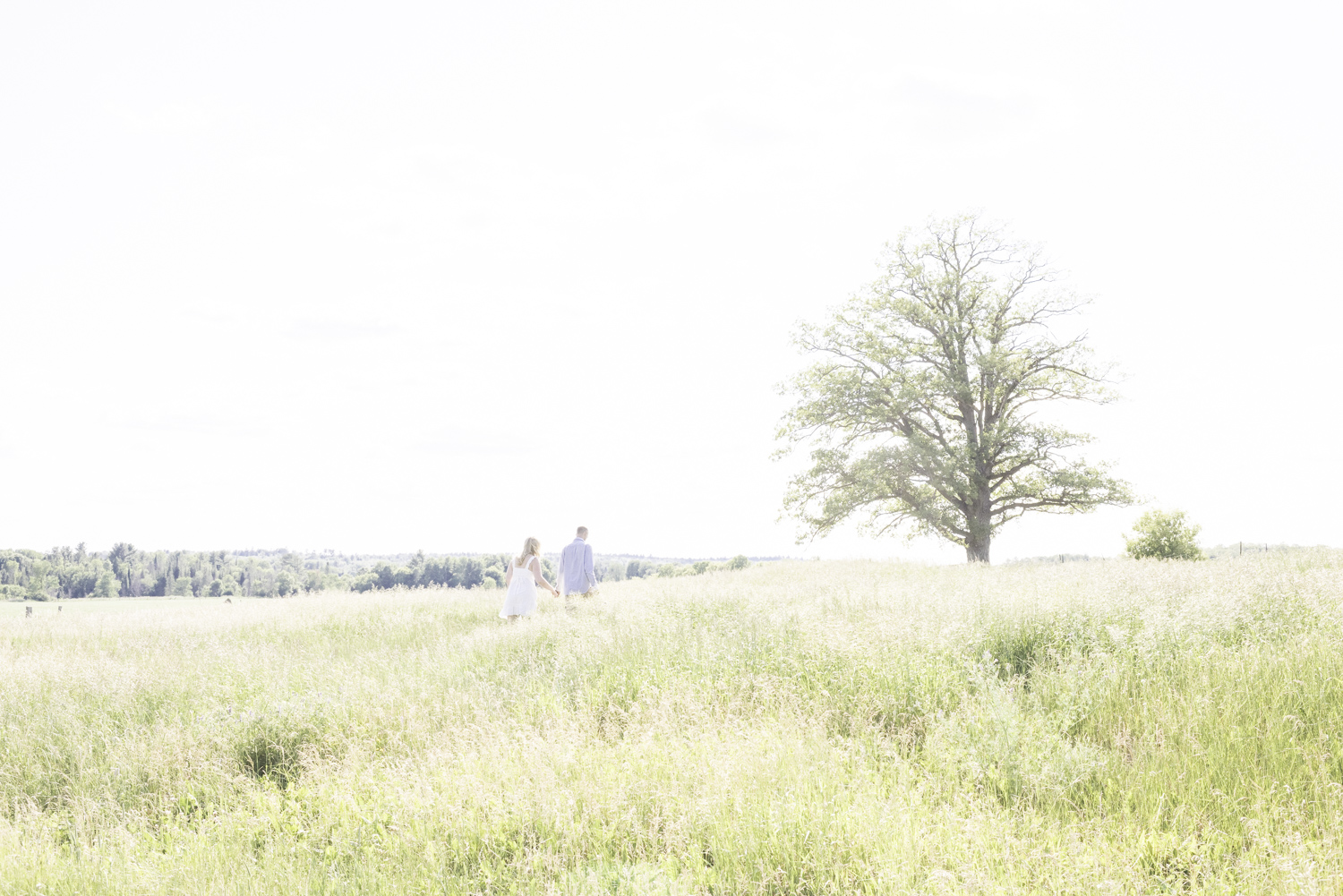 An overexposed photo of a couple walking through a field towards a tree