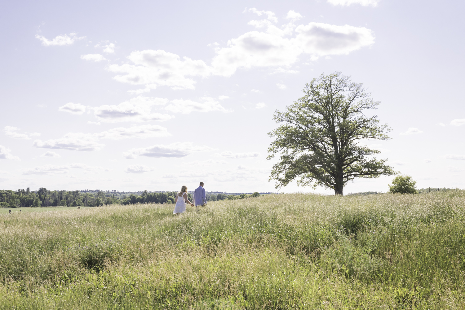 A properly exposed photo of a couple walking through a field towards a tree