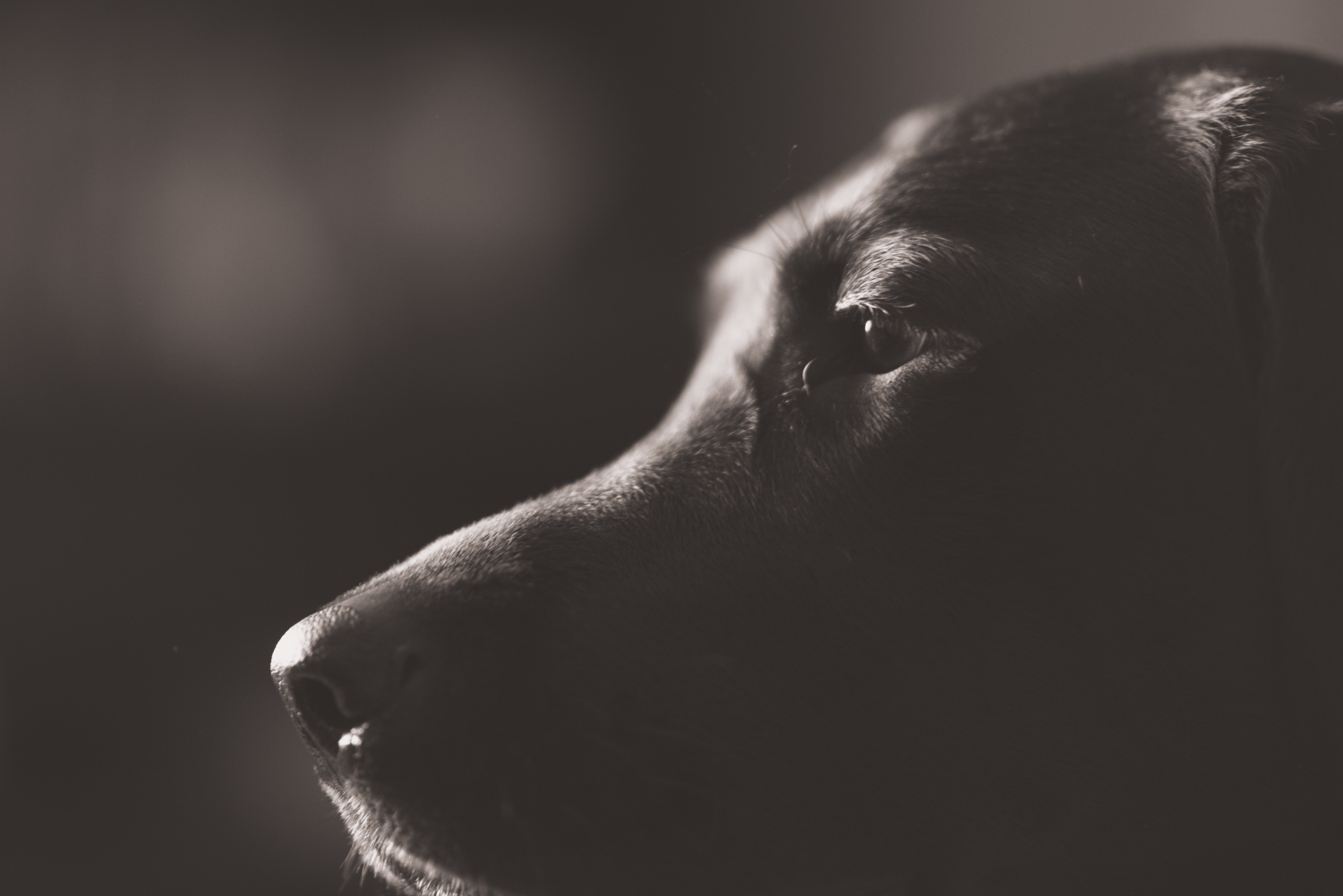 A low light photo of a dog taken during an engagement photo shoot