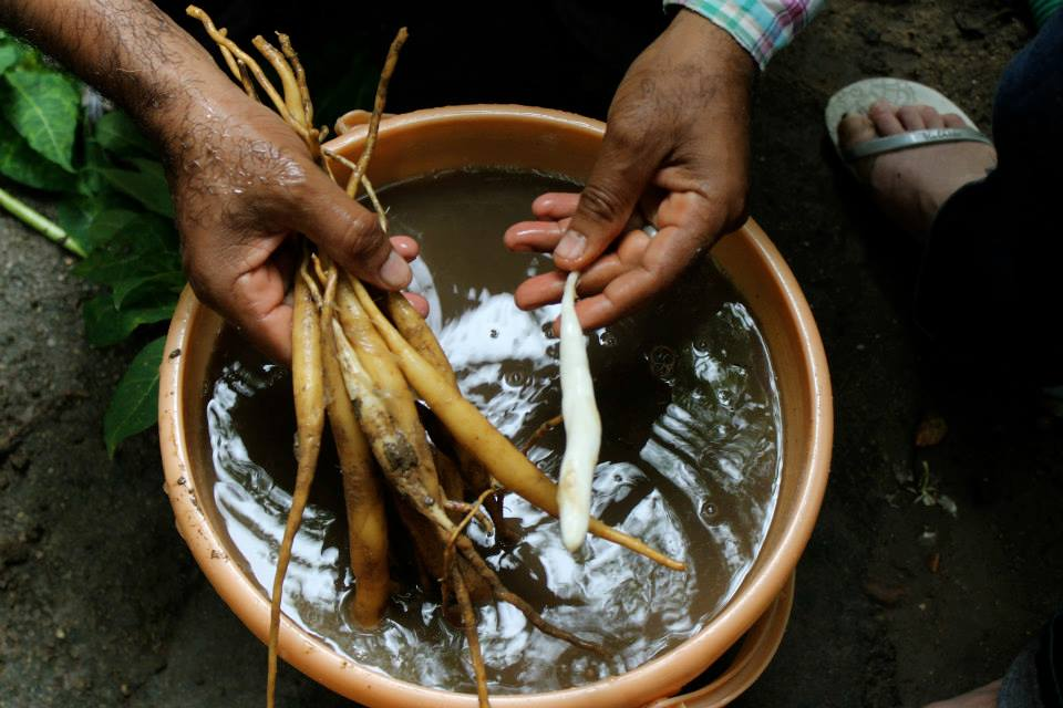 hands-on-health-washing-roots.jpg