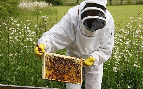 FS is a Beekeeper in her free-time. FS has a high stress job. Who doesn't tho?