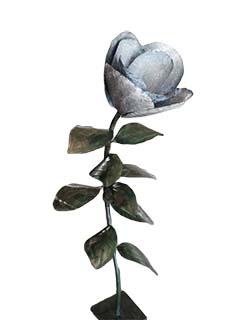 Magnolia de pie grande