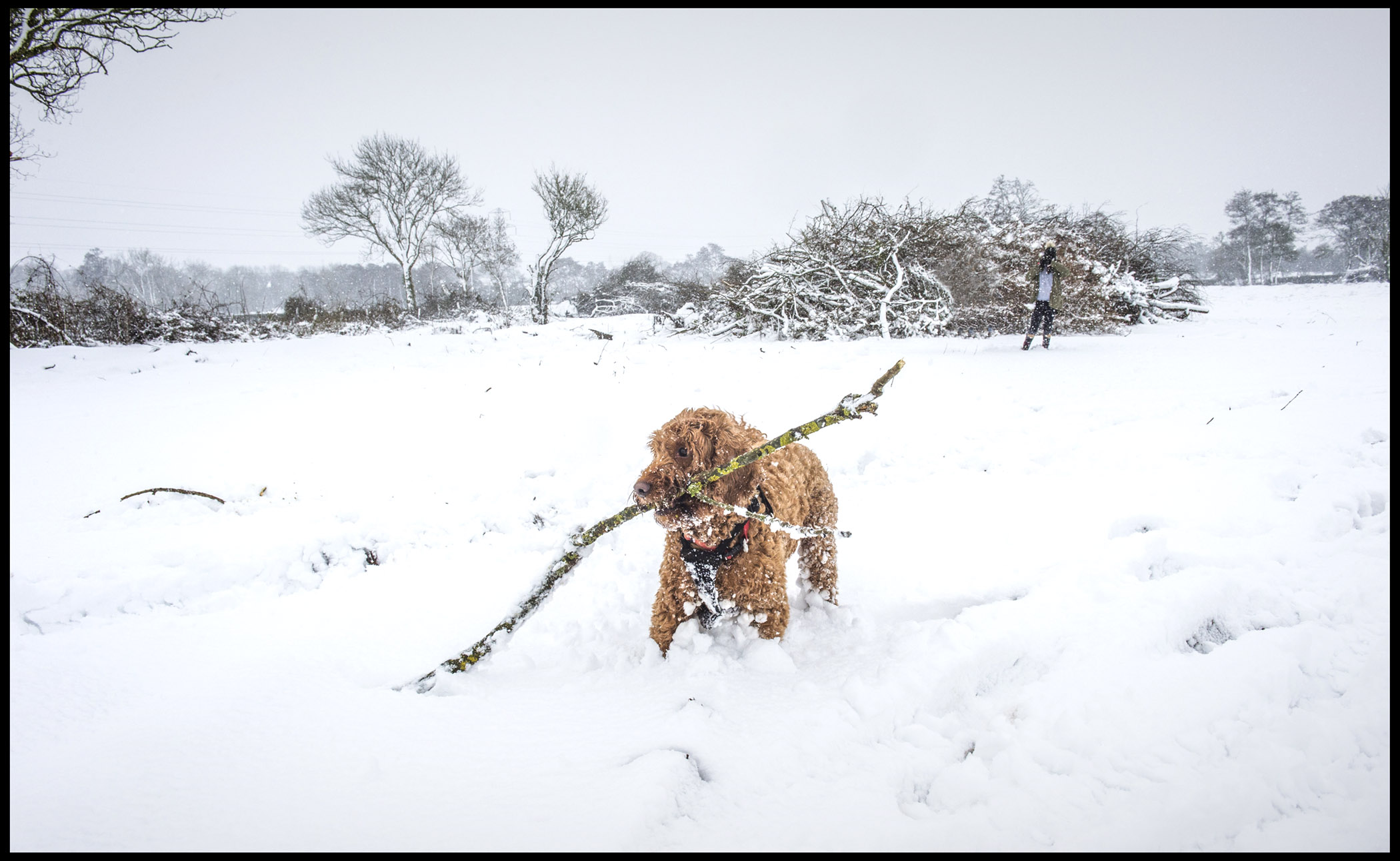 Fudge digging for sticks