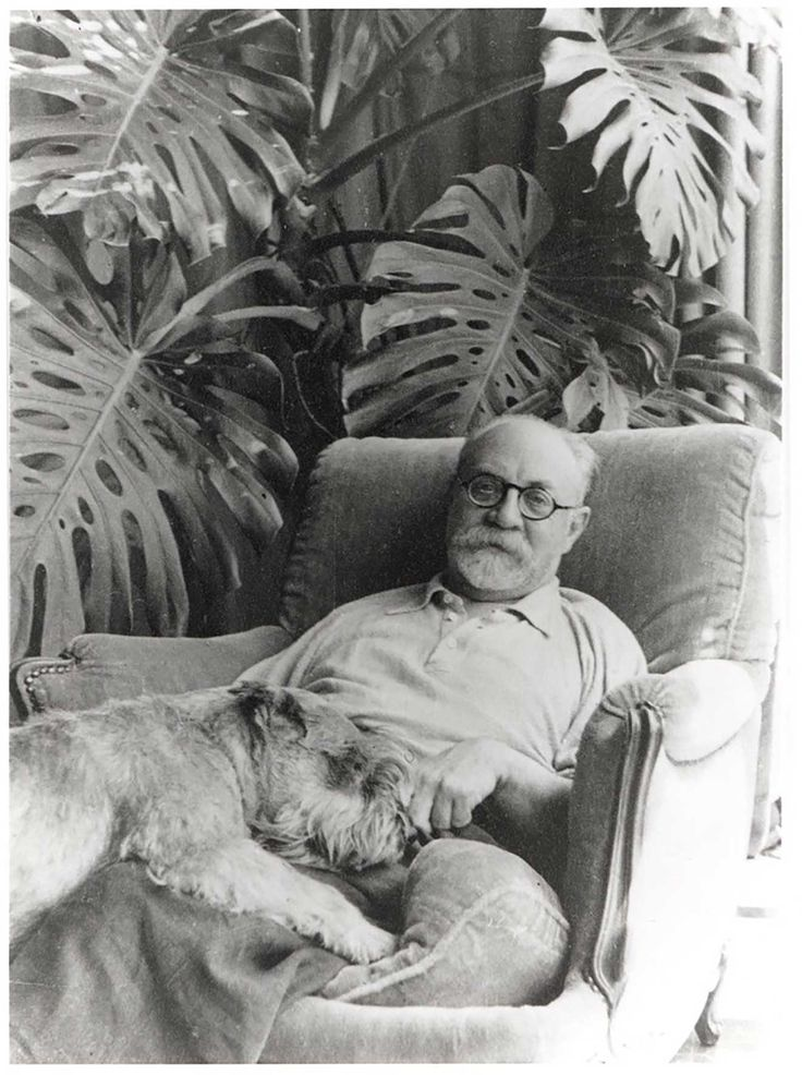 Henri Mattisse and his Monstera Deliciosa
