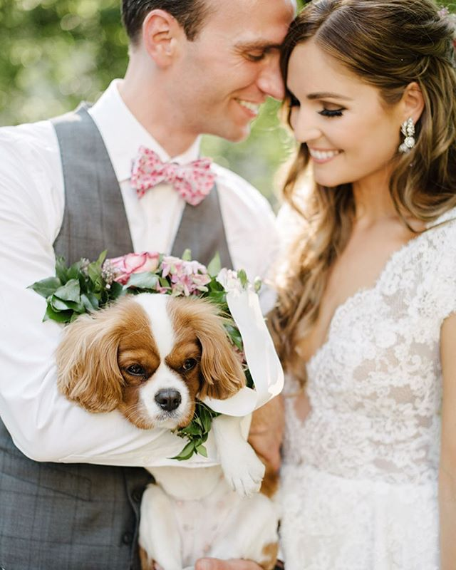 When your dog features in your wedding! This is a favourite I just realised I hadn't shared! I will be revamping the website soon so I need to trawl through a lot! #weddingsbydominiquebader #authenticportraits #timeless #beautifulstorytelling