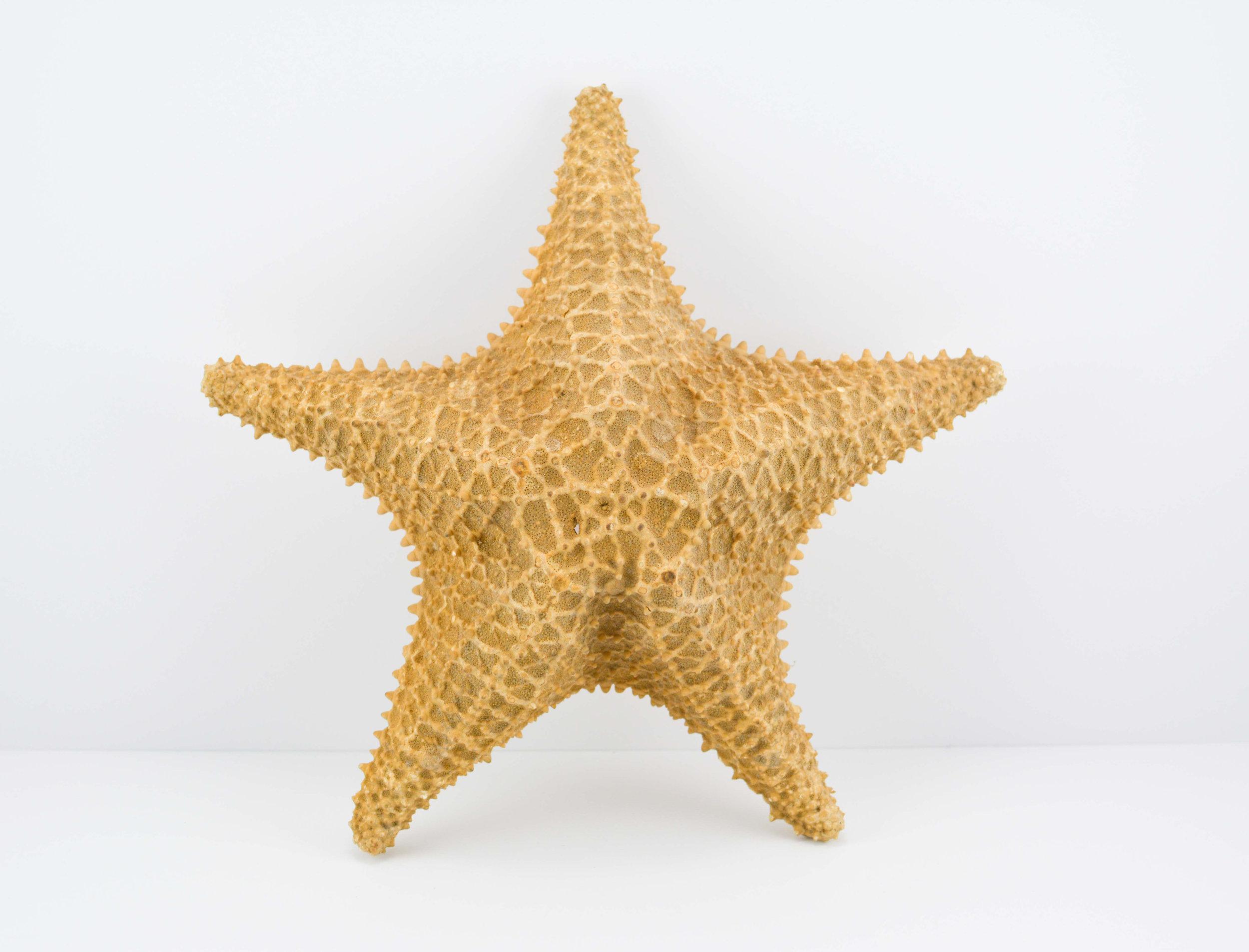 Elisa Soliven,  Starfish