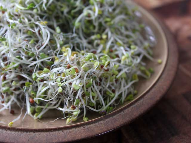 Broccoli-Sprout-Salad-2