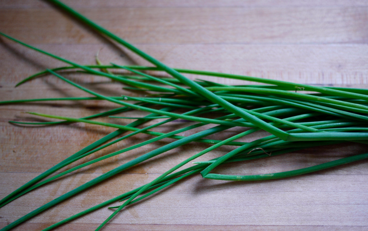 Chives picture from https://www.flickr.com/photos/grongar/4830422541/