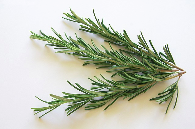 Rosemary Picture from http://pixabay.com/en/rosemary-spice-kraeuer-food-eat-74365/