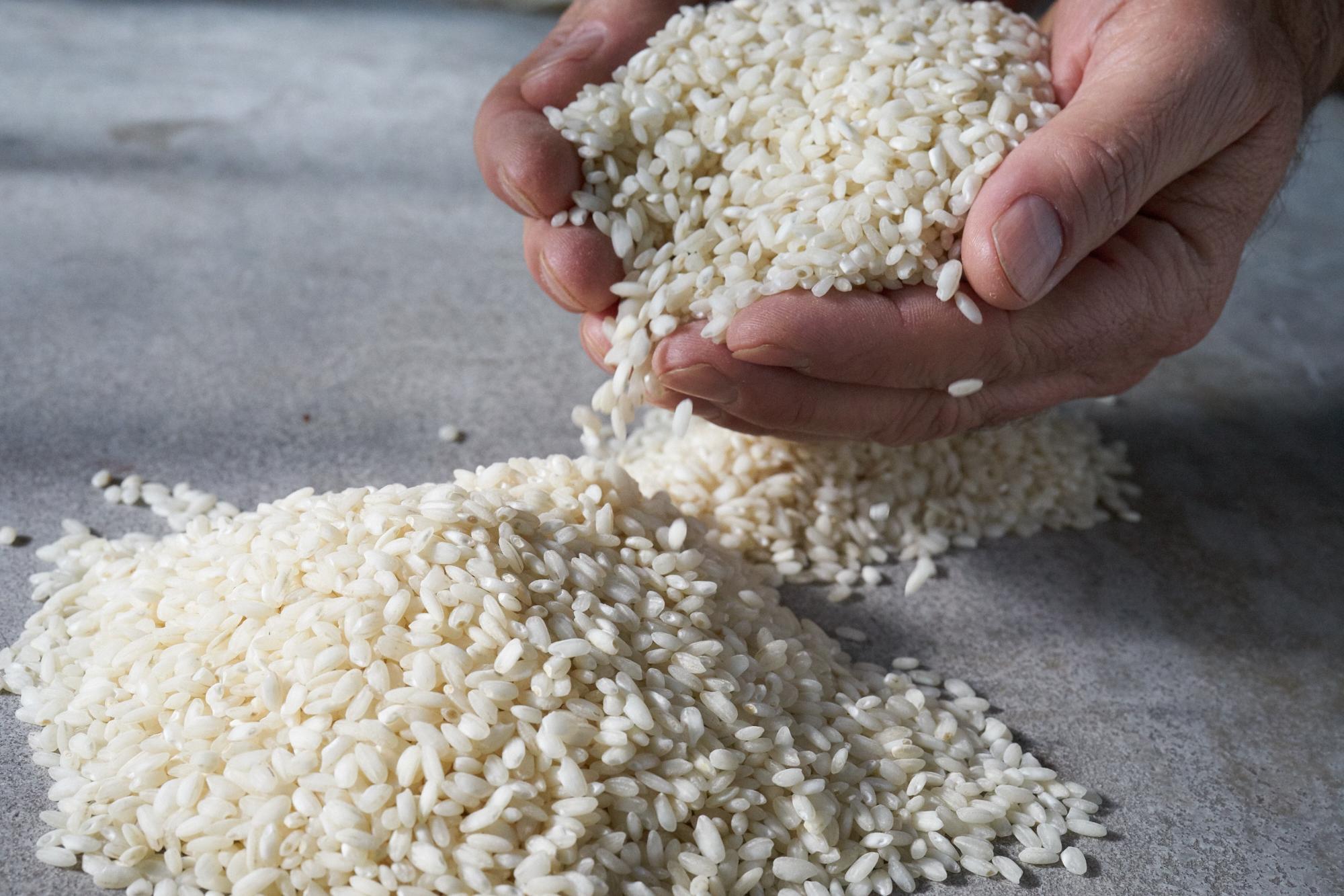 Rice_0263.jpg