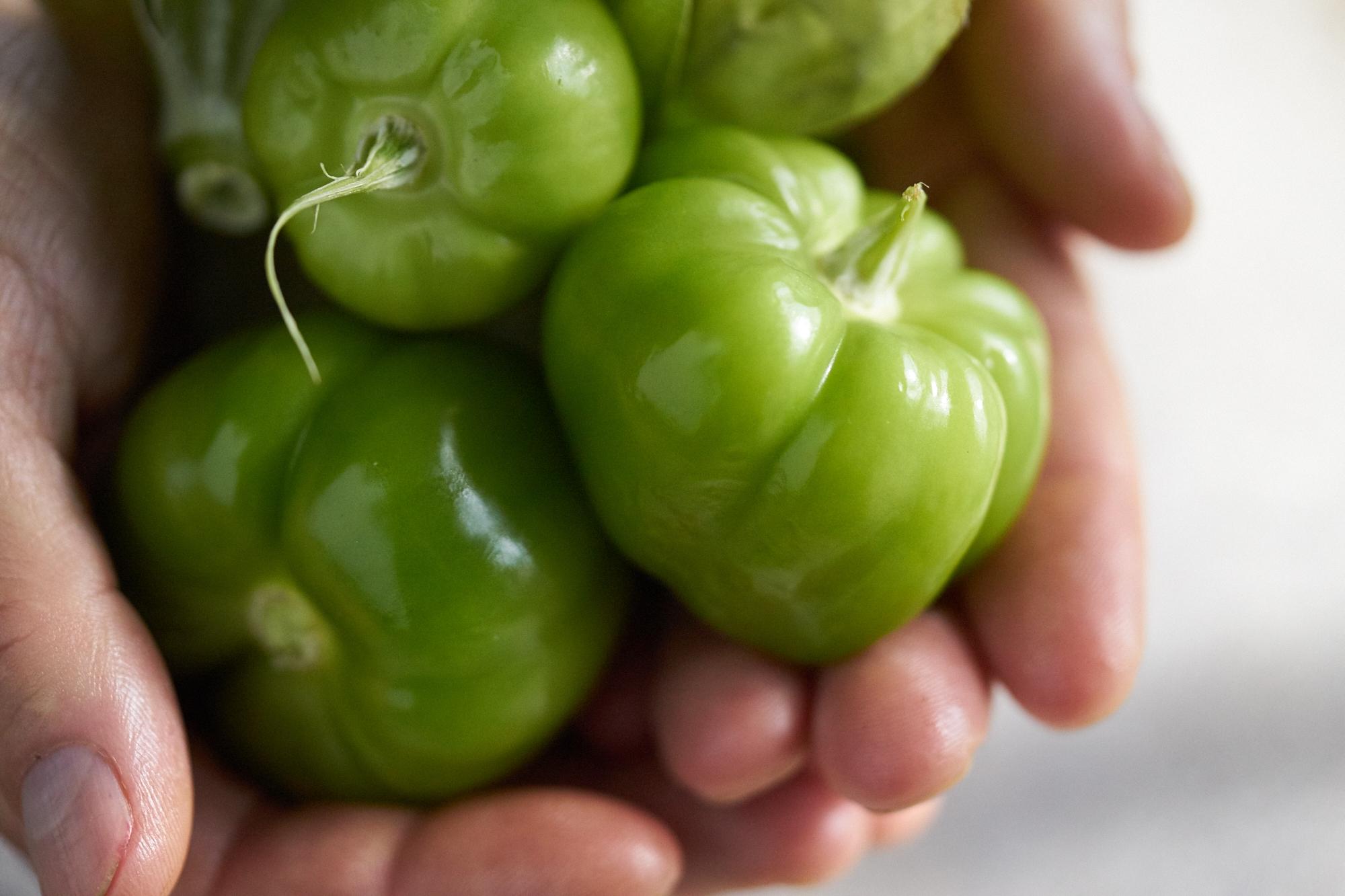 Tomatillo_1827.jpg