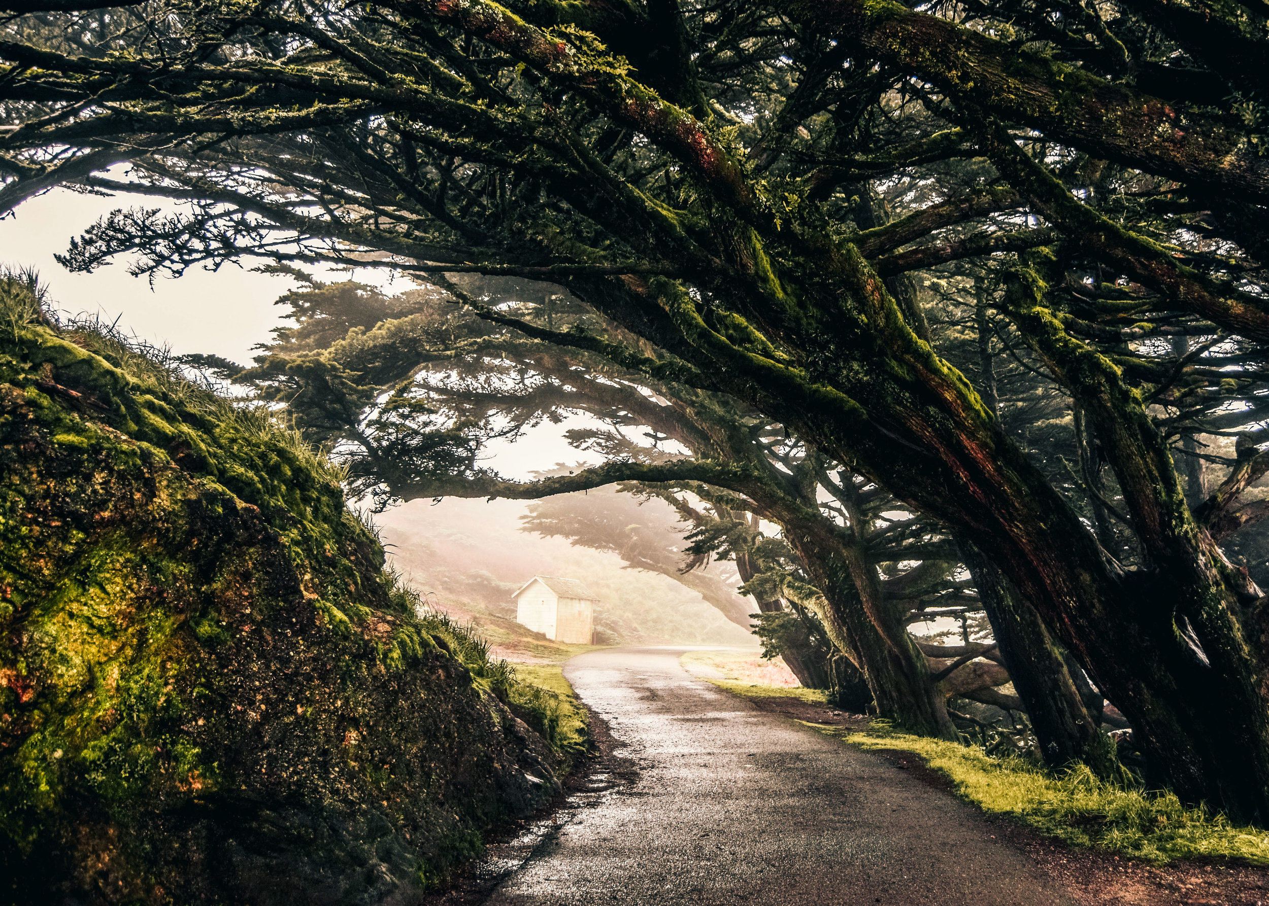 PointReyes_treetunnel_green.jpg