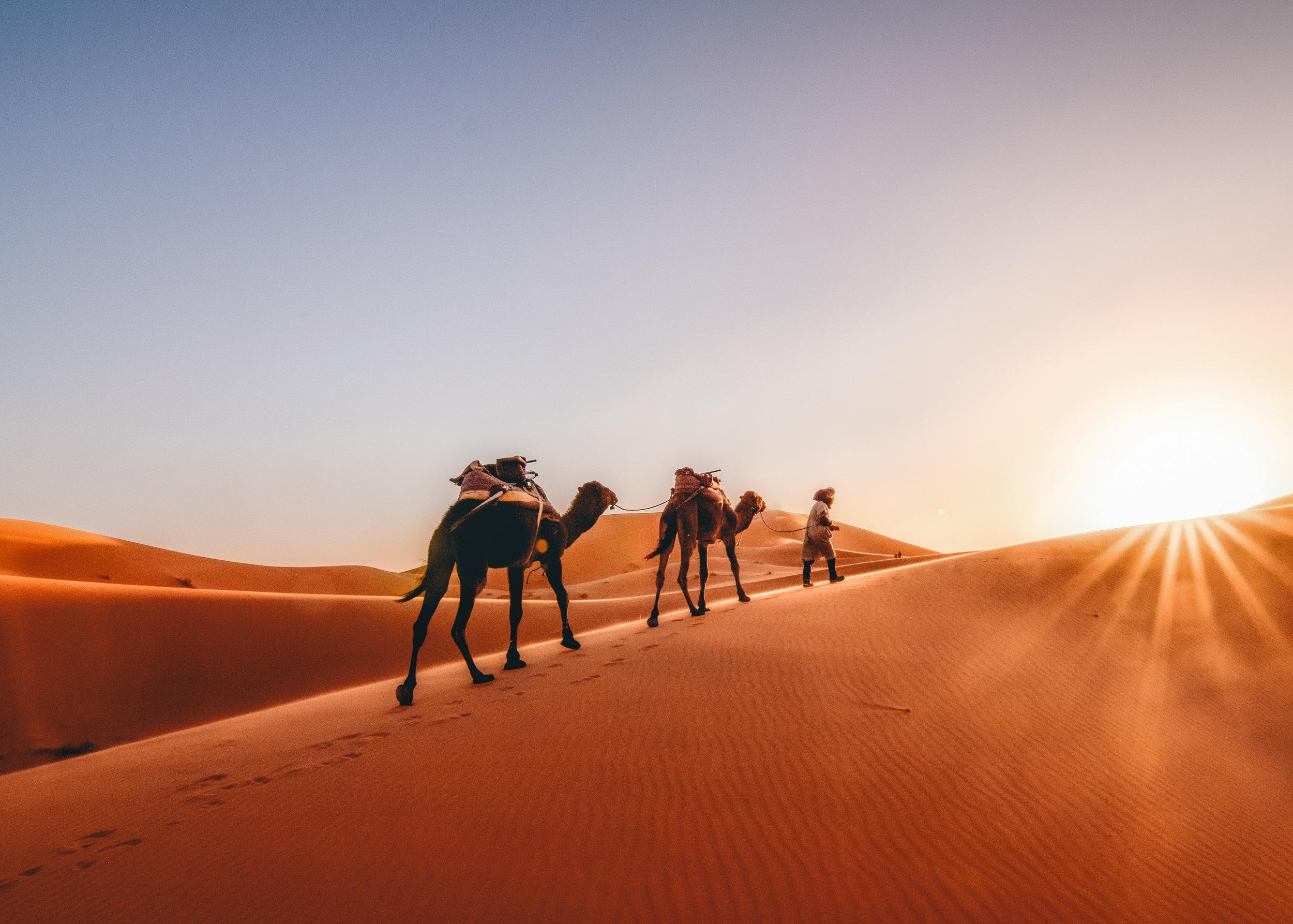 Sahara_caravan_intosun.jpg