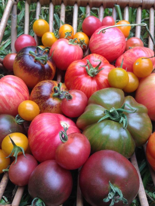 Heirloom Tomatoes Taste The Rainbow