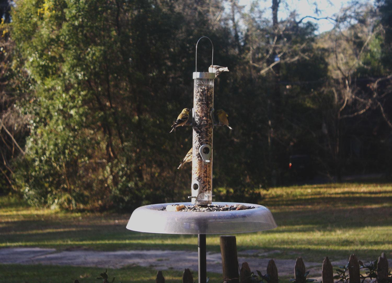 goldfinch-e-feeder.jpg