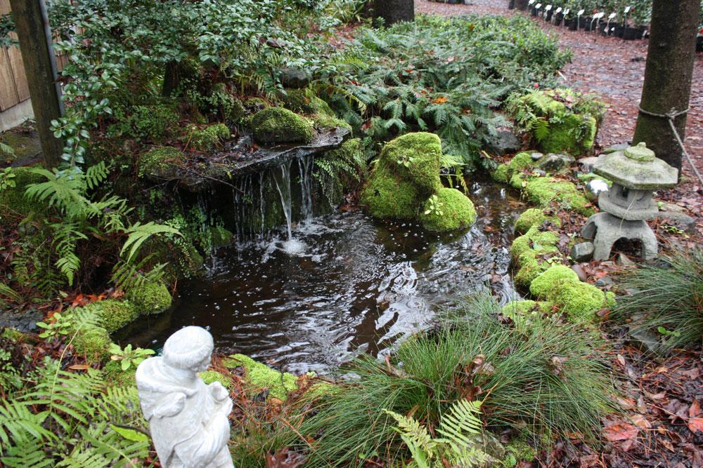 front-pond-nursery.jpg