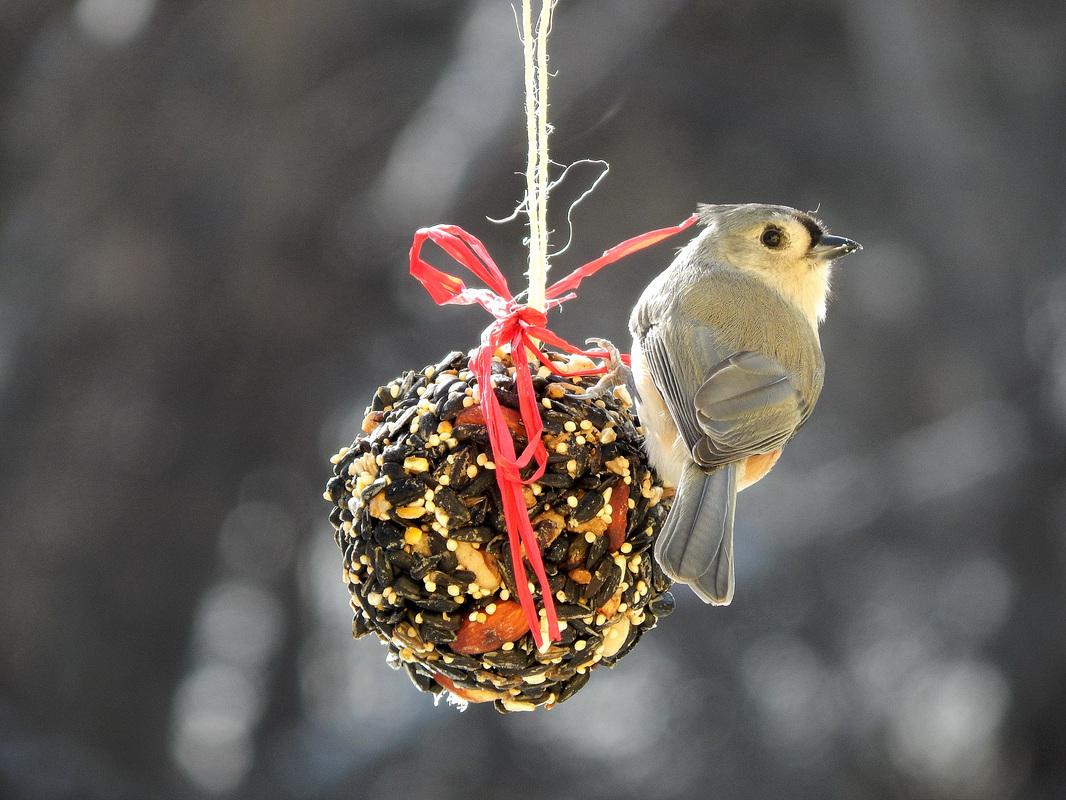 birdseed ball with titmouse.jpg
