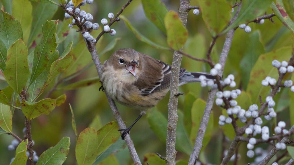 Bird Gardens -