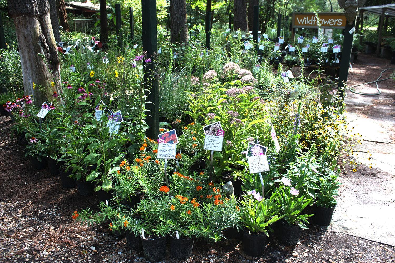 Native Plants Garden Blog Butterfly Rearing Cage Gift Shop Landscape Design Bird Seed Feeders Garden Center Nest Boxes Christmas Trees