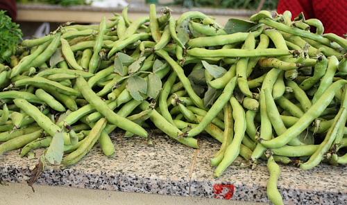 fava-beans-vv