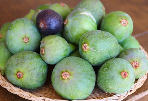 picked-figs-from-my-tree