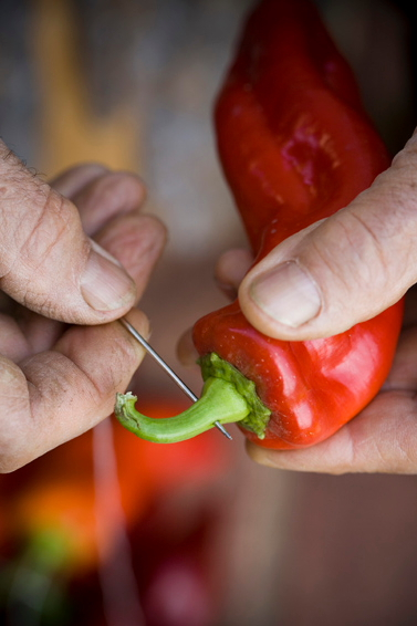 Threading peppers