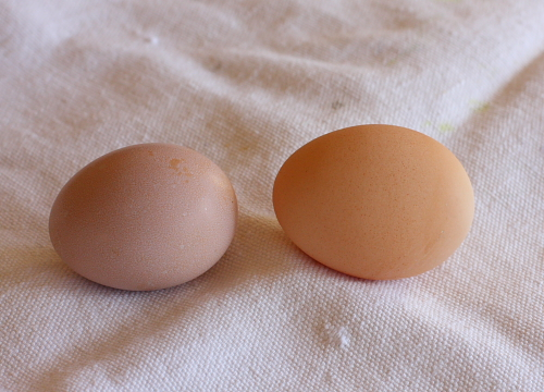 First and second egg