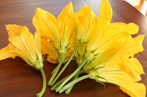Daily pick pf Zucchini blossoms July 2010
