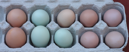 My chicken eggs July 2010