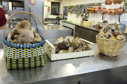 Mushrooms picked in La Sila