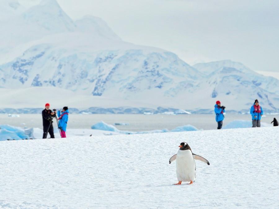 Bli med på tur til Antarktis med Hurtigruten.                            Foto: Hurtigruten