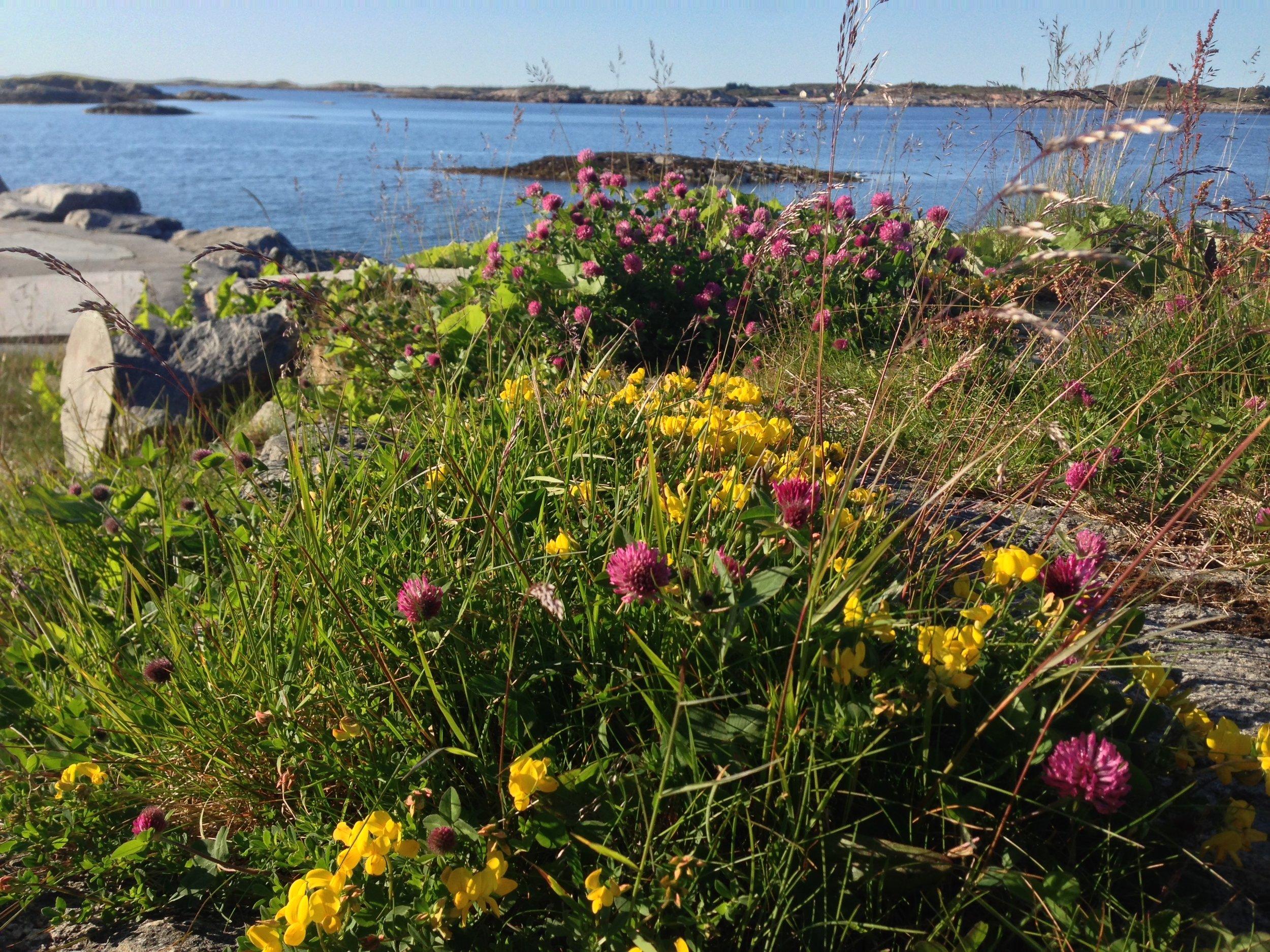 Fargerik flora og fauna