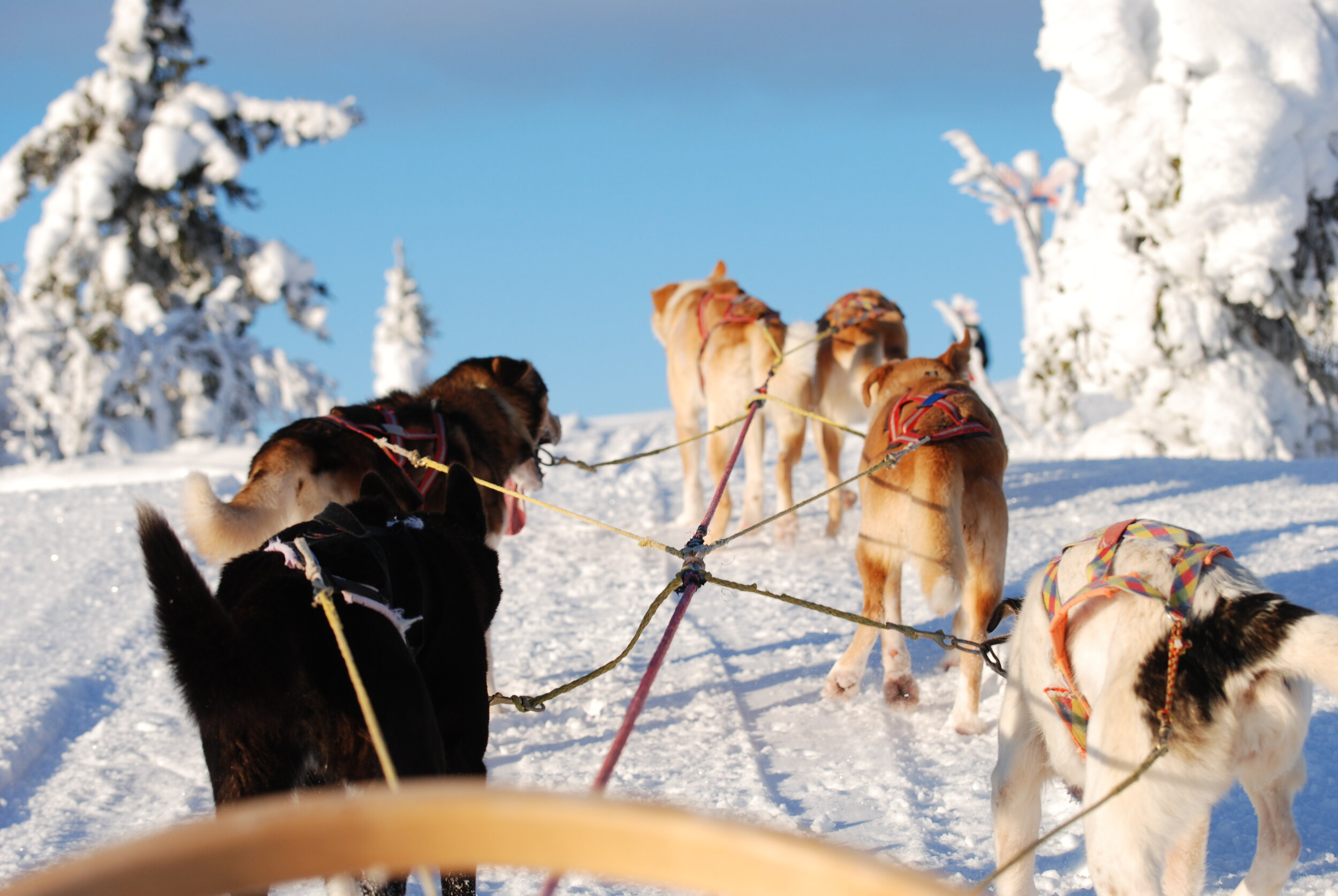 En herlig starte på skiferien fra Scandinavian Mountains Airport. Foto: Peakpoint