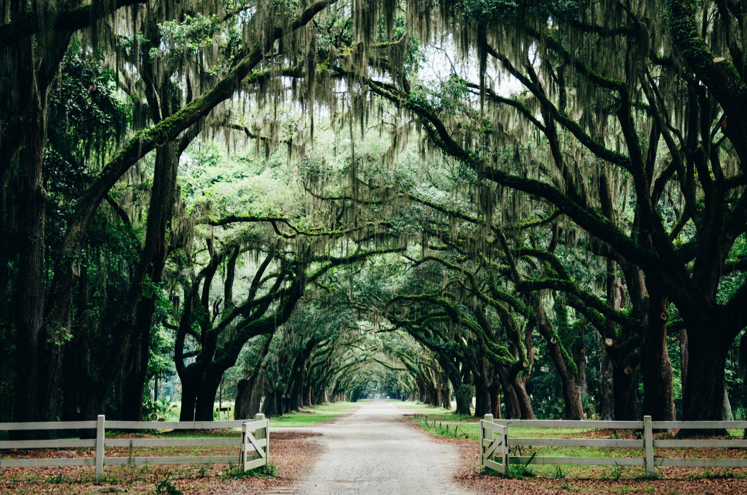 Avenue of Oaks - Boone Hall Plantation - Charleston, SC