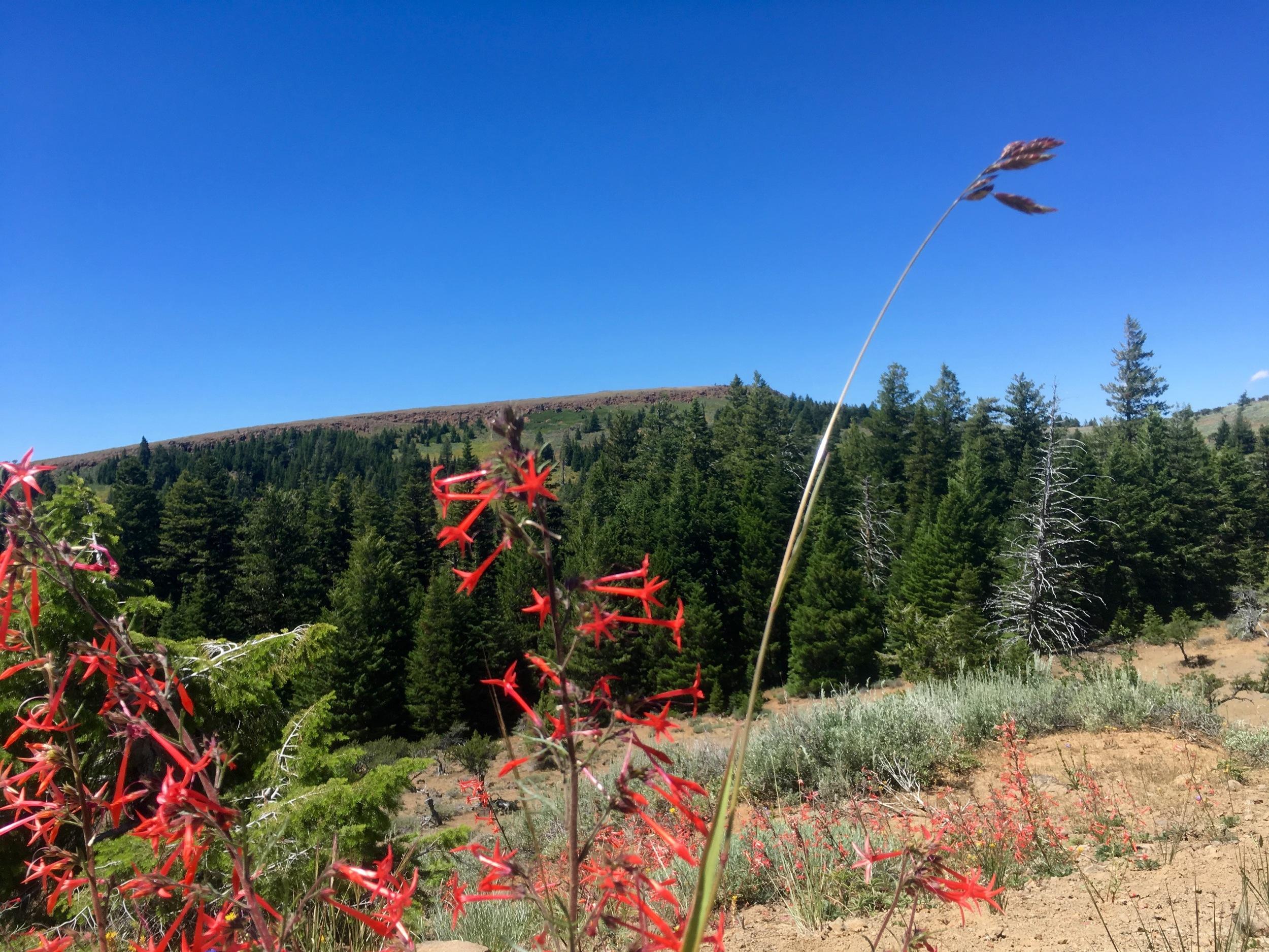 Skyrocket & Spanish Peak
