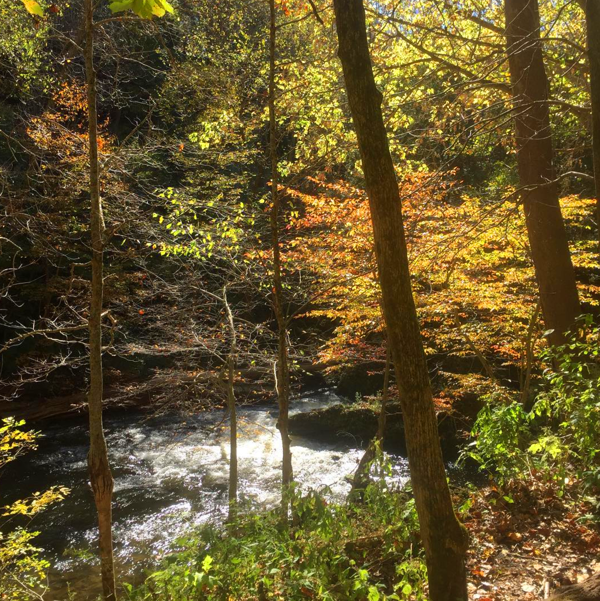 Photo by @thereselink at John Bryan State Park in Yellow Springs, Ohio