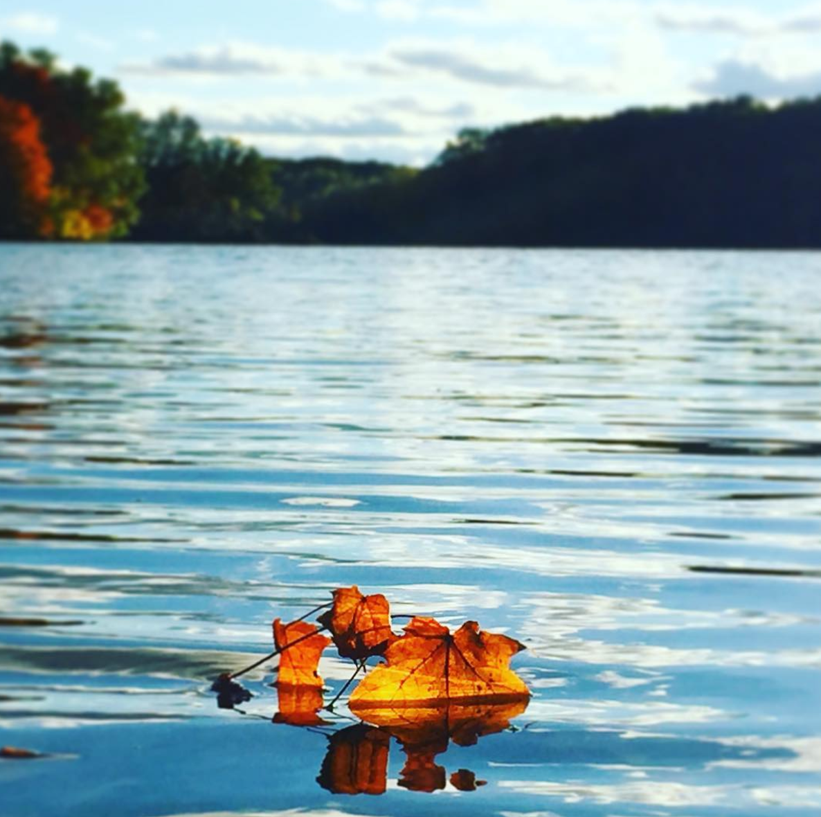 Photo by @thisiscortney at Findley State Park in Wellington, Ohio