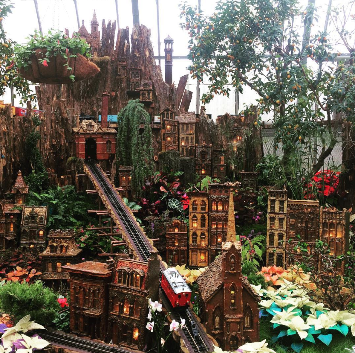 Photo by @realfoodbrandae at Krohn Conservatory in Cincinnati, Ohio