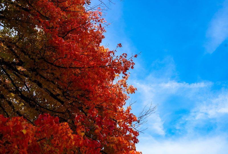 Autumn Cleveland Ohio Fall