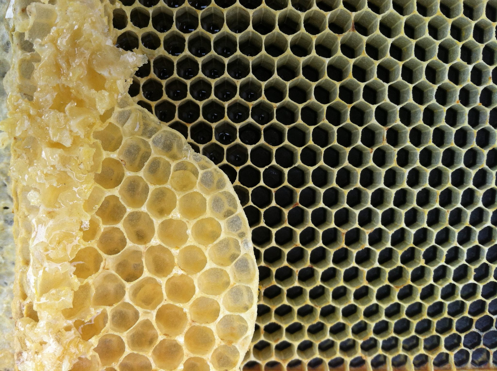 Ginger Bee Hive Wax