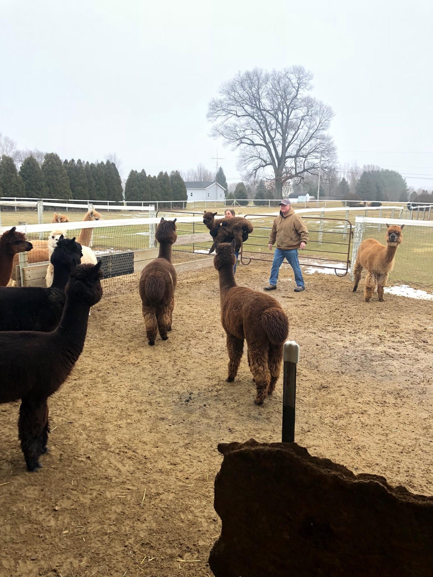 Sunny Meade Alpaca Farm