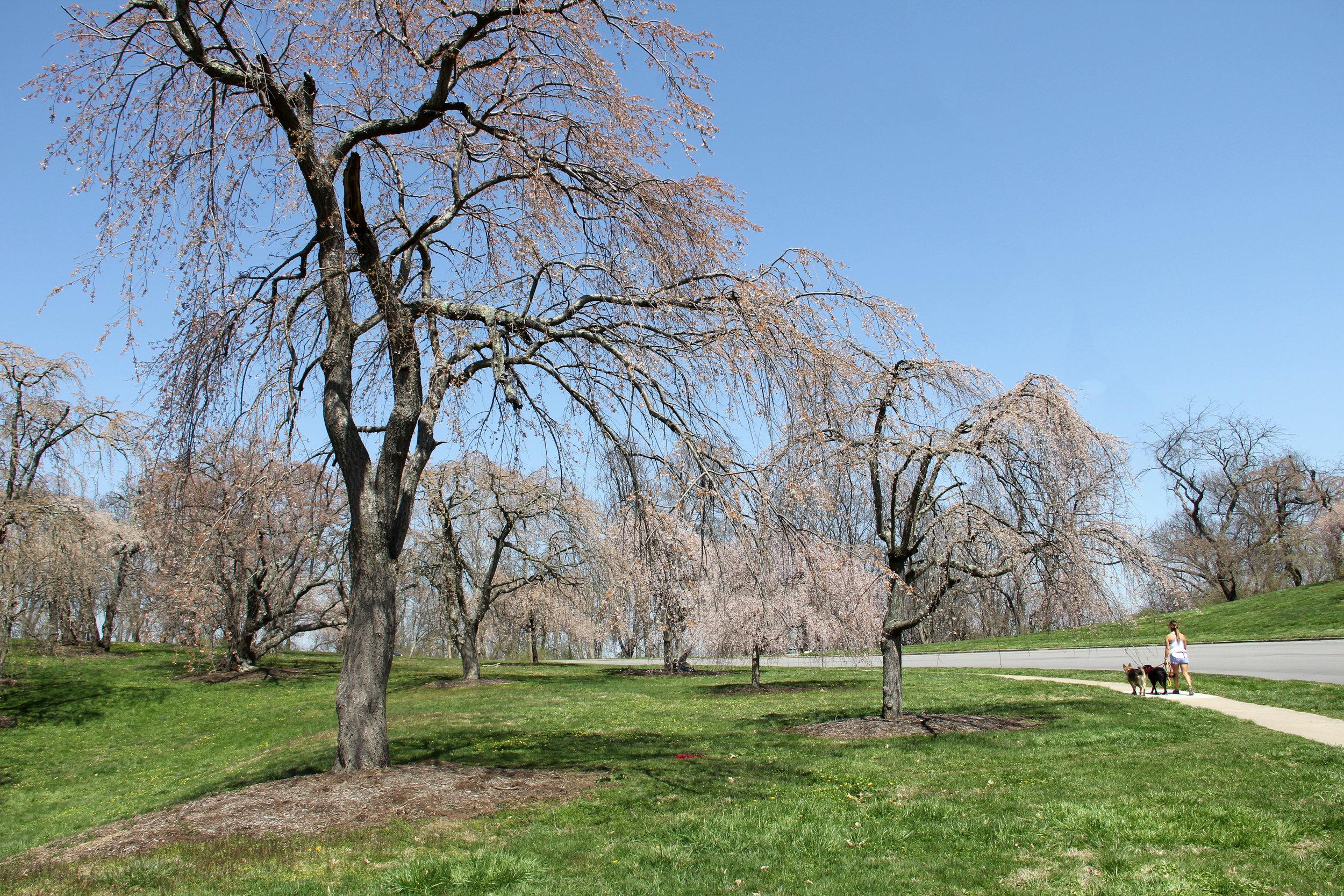 Ault Park Cincinnati