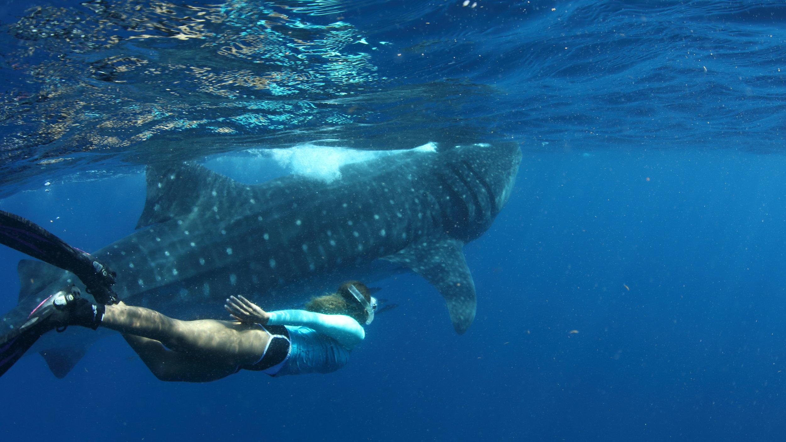 Danni_swims near WS.JPG