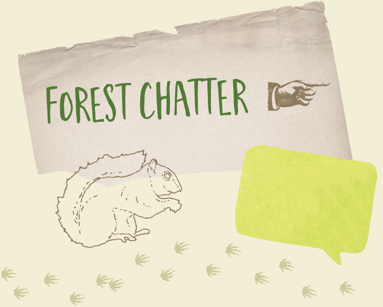 Forest Chatter