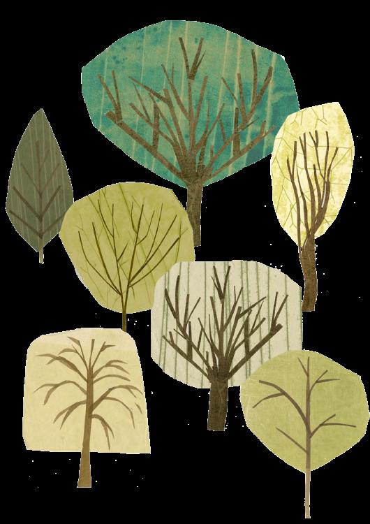 Tree illustrations by Julie Benda