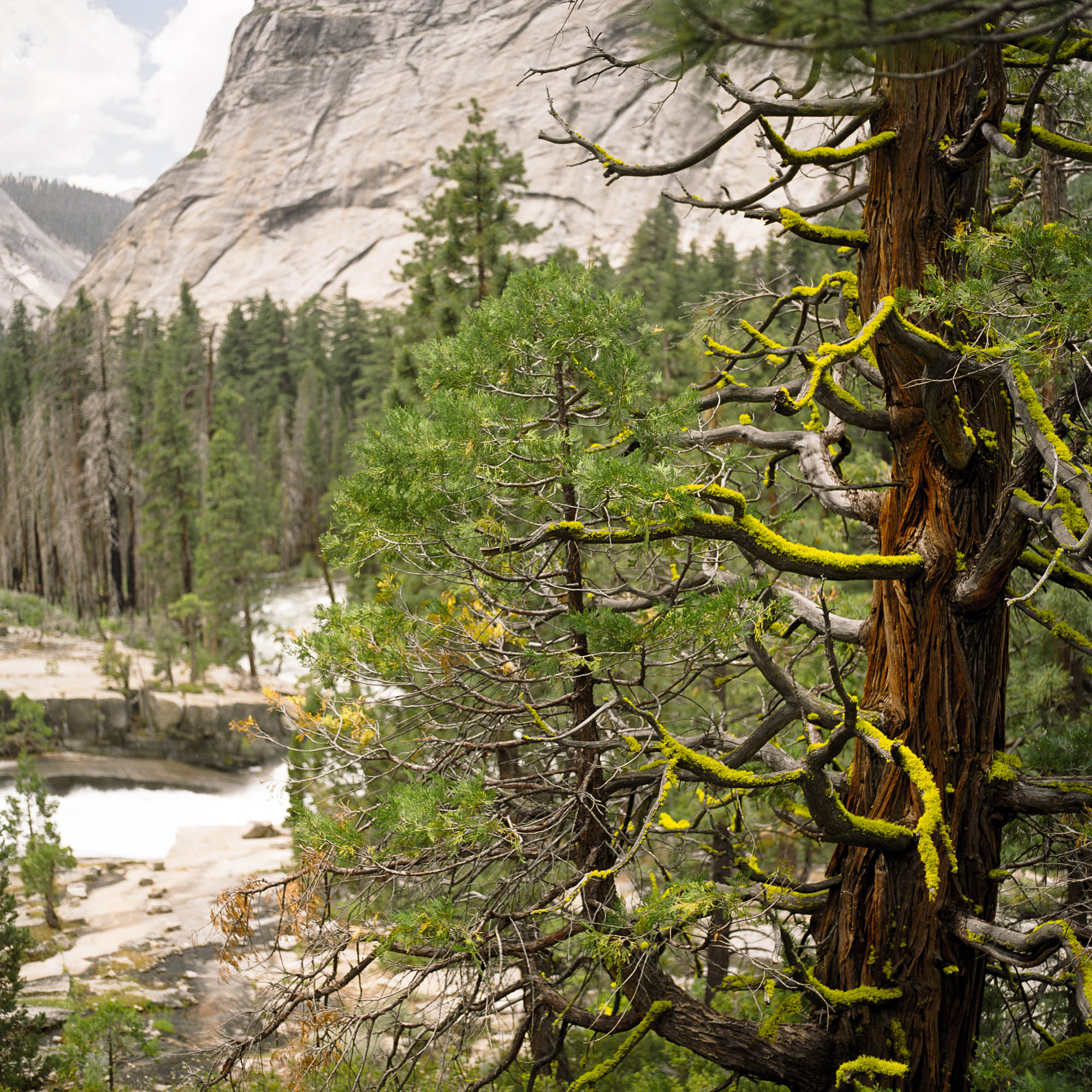 TRAVEL_020_YOSEMITE_01-E-SMALL.jpg