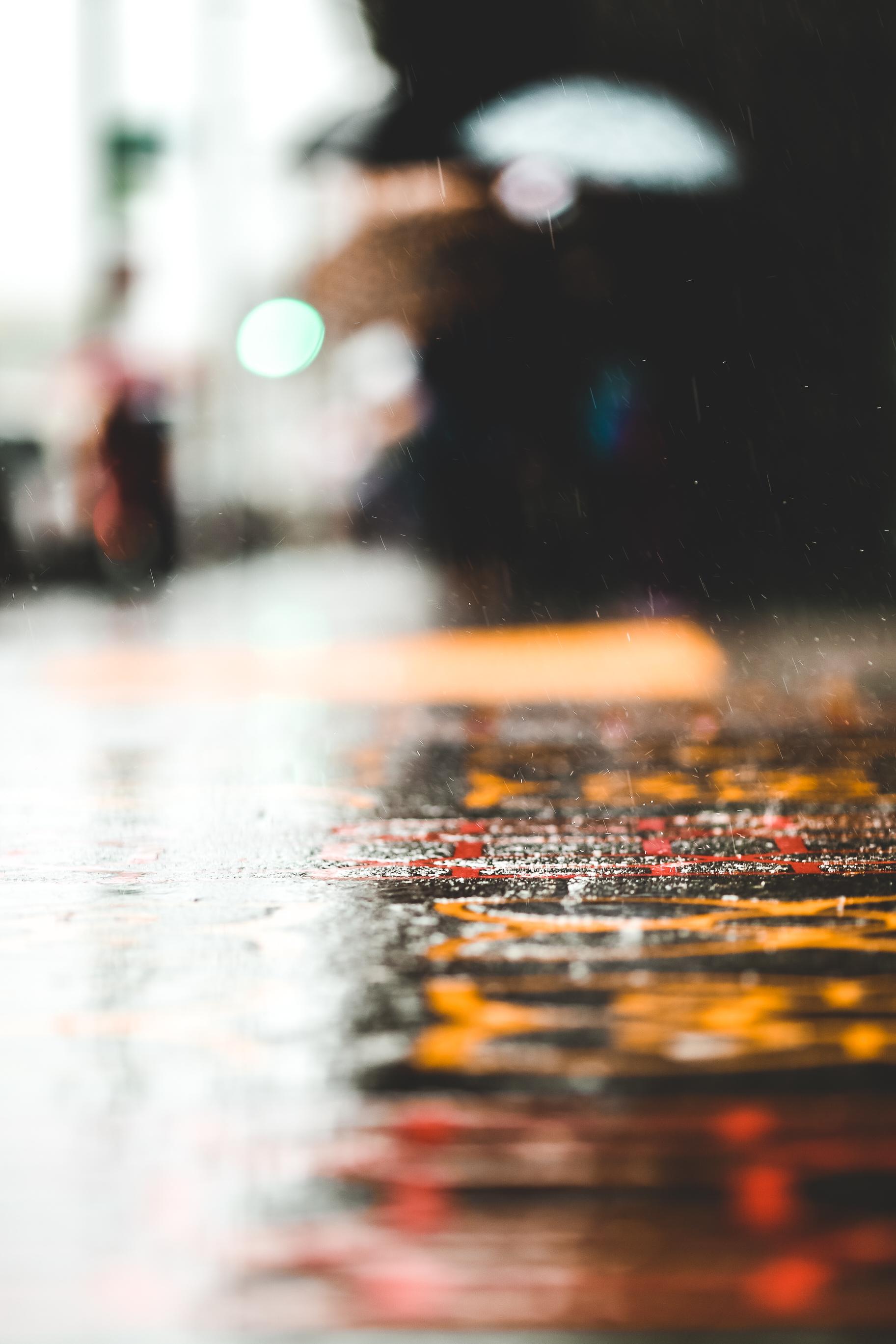 Rainy Days Oak 005.jpg