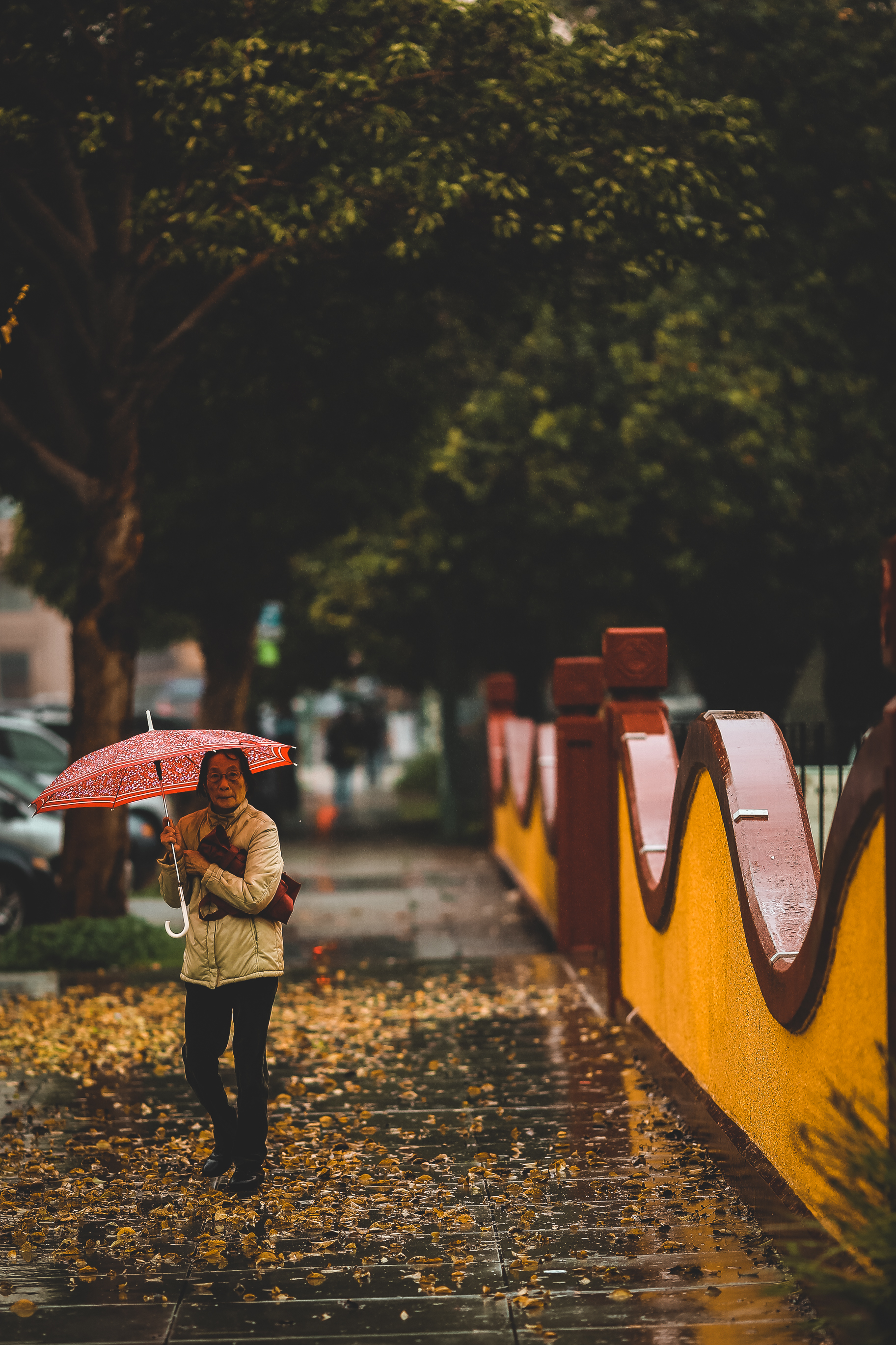 Rainy Days Oak 0029.jpg