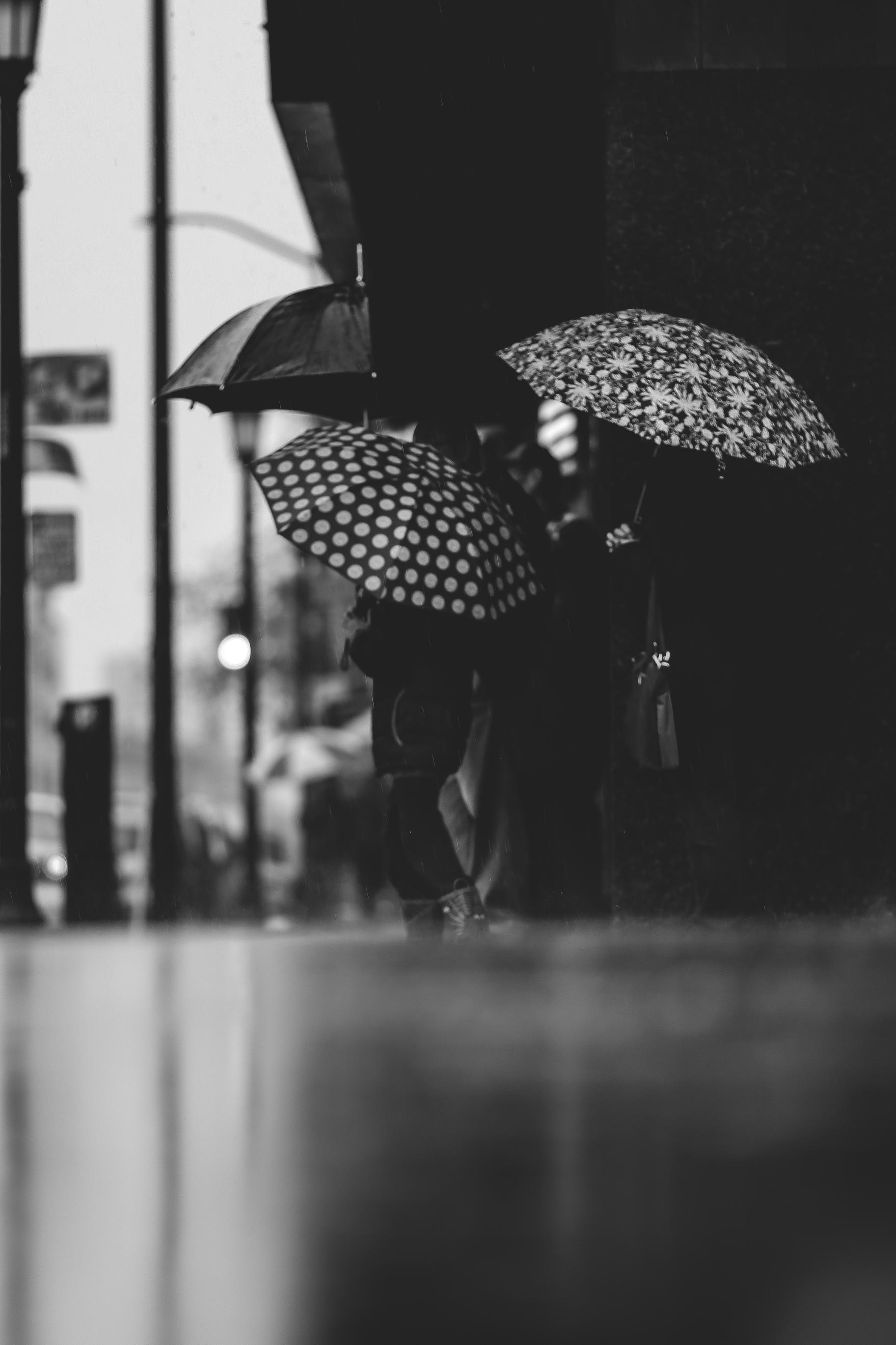 Rainy Days Oak 006.jpg