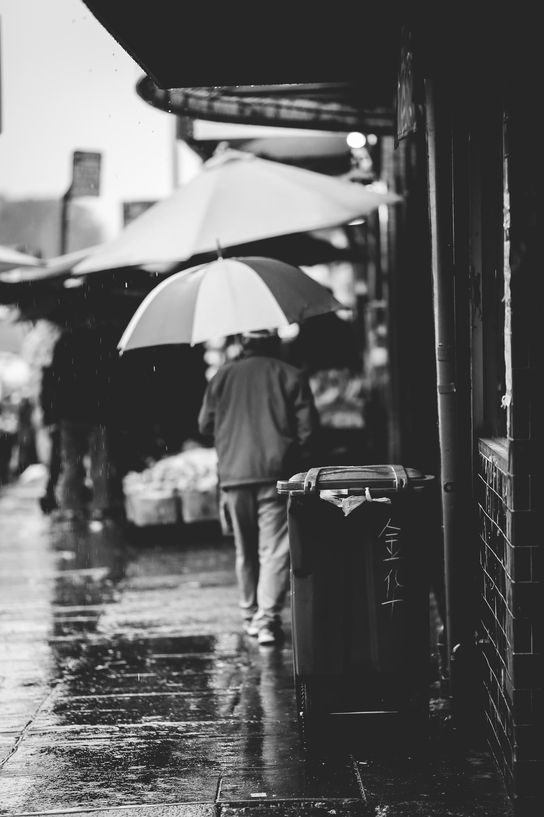 Rainy Days Oak 0031.jpg